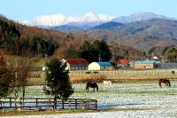 牧場の向こうに望む日高山脈
