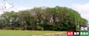 南幌自然観察教育林