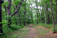 国見山自然観察教育林の写真