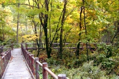 みんなの森の写真