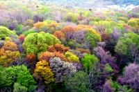 藻岩山の森の写真