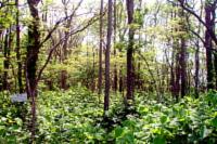 南幌自然観察教育林の写真