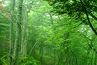 緑に染まる森