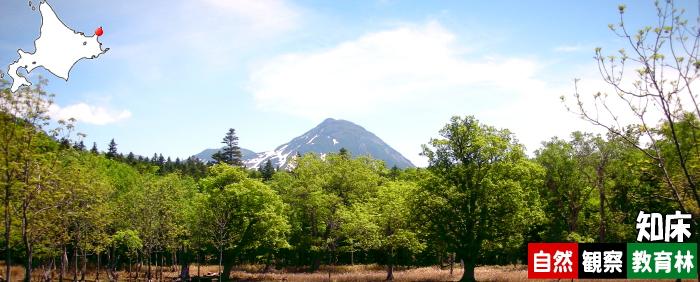 知床自然観察教育林