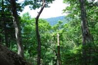 知床の森の写真