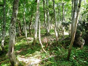 エゾシカがササや低木のほとんどを食べてしまった光景です。
