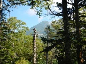振り返ると羅臼岳が見えました。