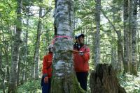 林尺体験その4
