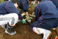 掘り取り作業3