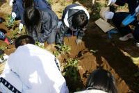 掘り取り作業2