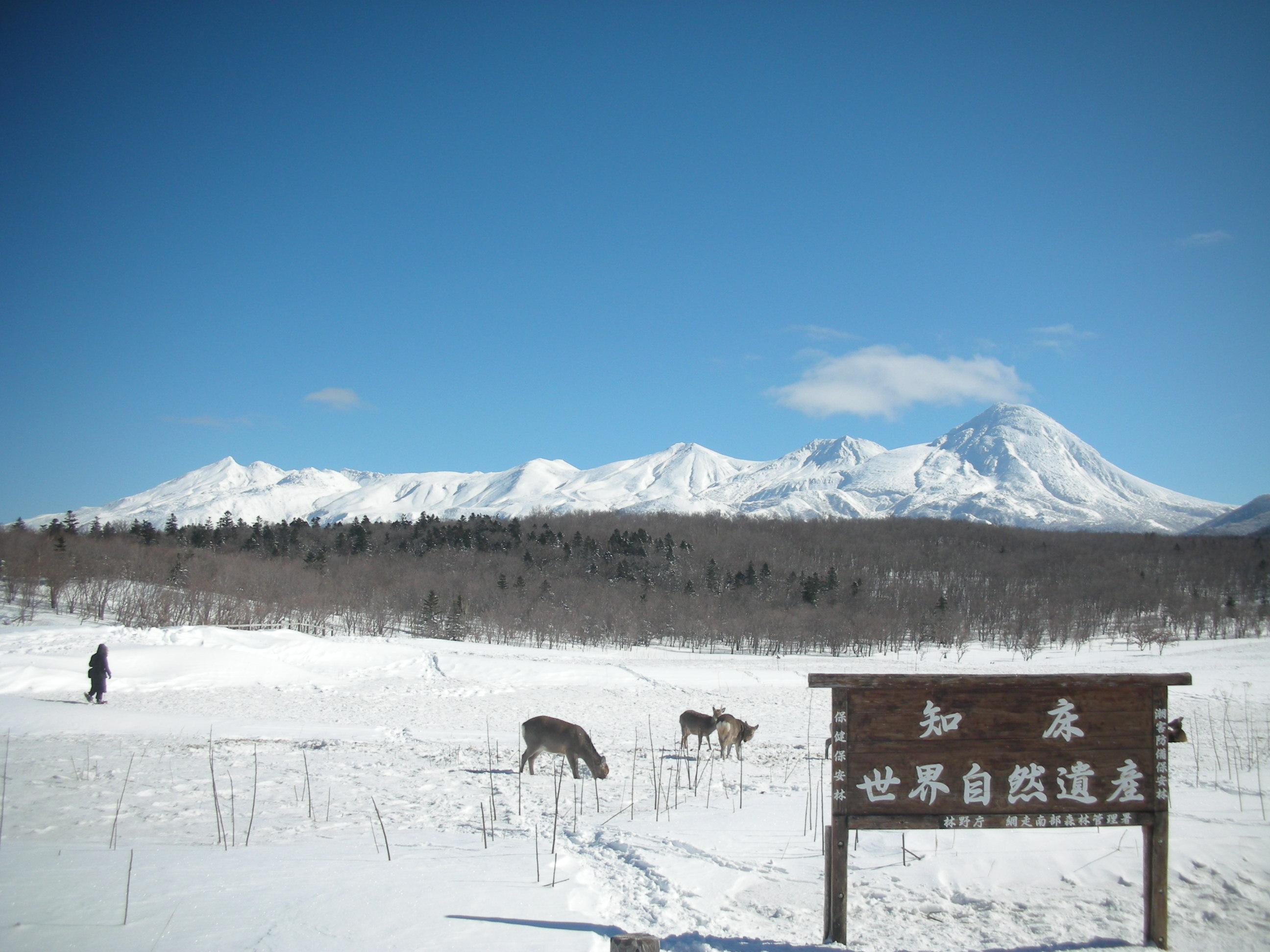 散策路からの知床連山