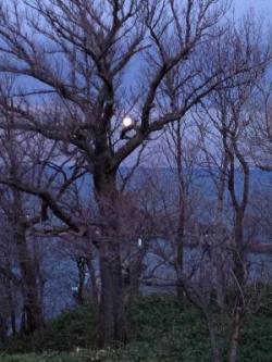 朝になっても輝き続ける満月