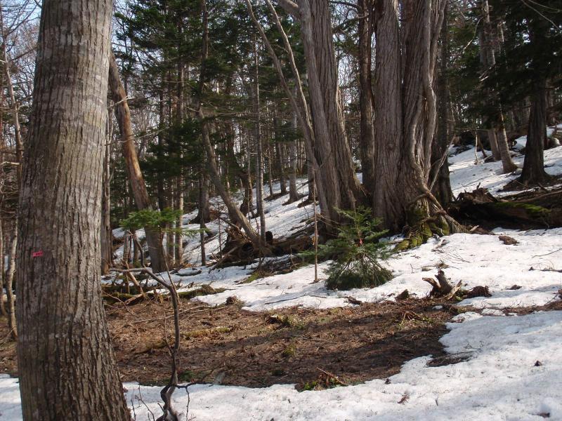 イチイ保存林