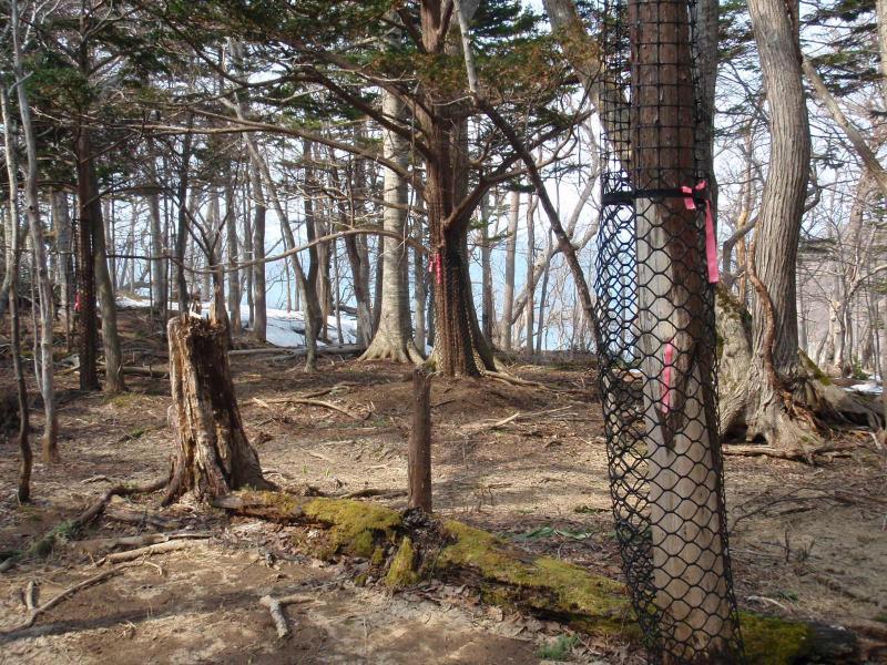 イチイ保存林 シェルター