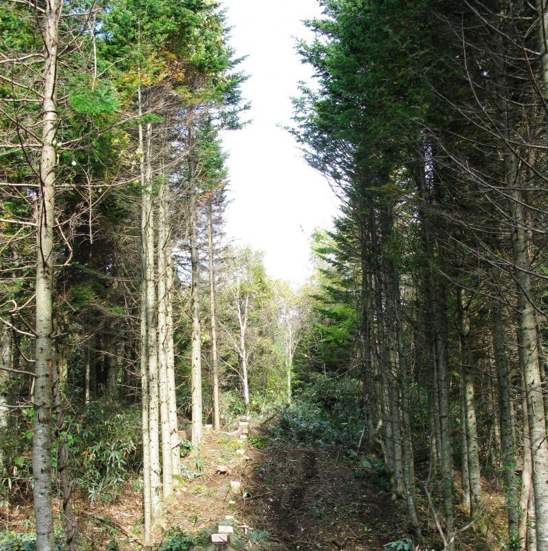 列状間伐 「列状間伐」 機械的に列状に間伐する方法で、初めて間伐を行う場合などに... 北海道森