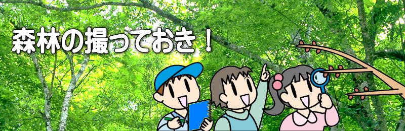 森の撮っておき!