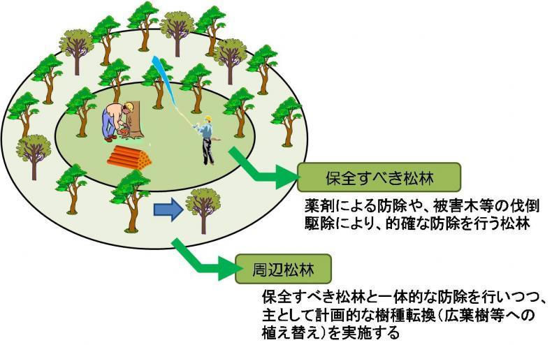 保全すべき松林と周辺松林