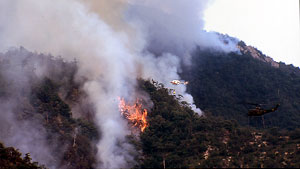 恐ろしい山火事