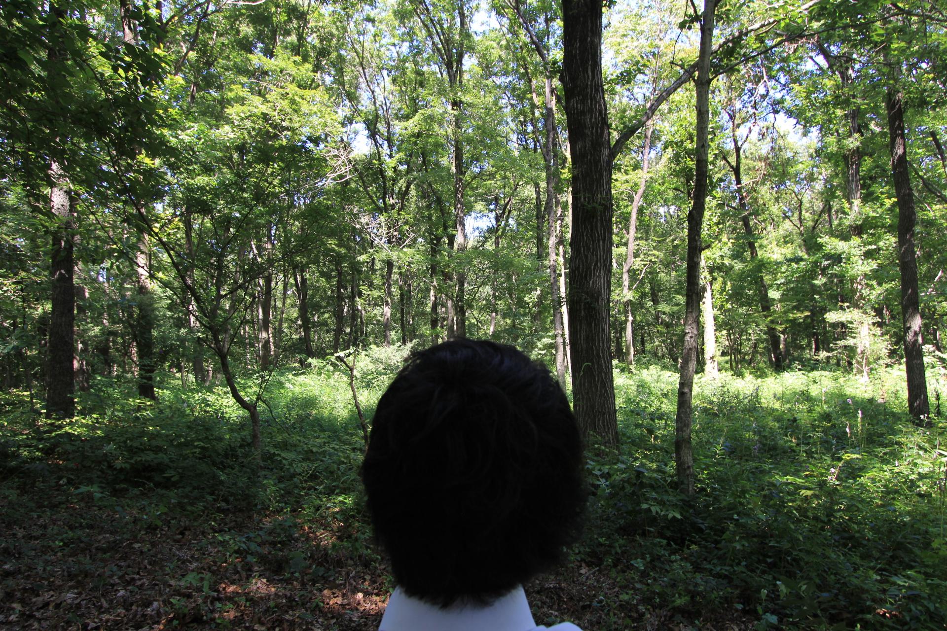 森林内座観