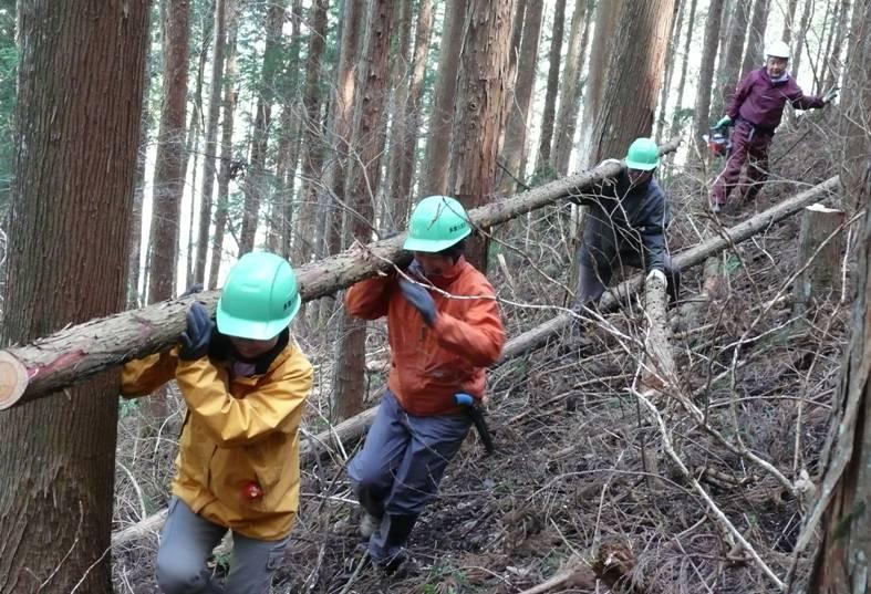 林野庁/木工作用の間伐木を運び...