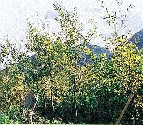 広葉樹(クヌギ)による森林づくり