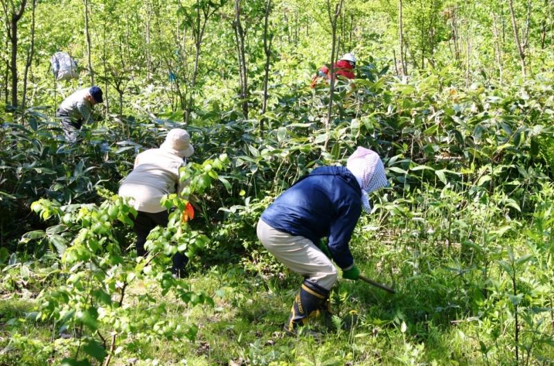 写真:NPO法人と共同の下刈り作業の様子