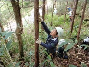 画像:ふれあいの森での森林整備体験