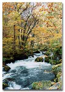 豊かな水を育む森林