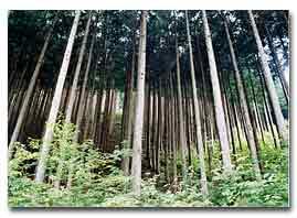 整備された森林