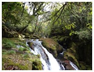 源流の森林
