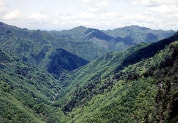 人工林遠景