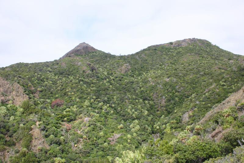 小笠原諸島の自然の画像 p1_26