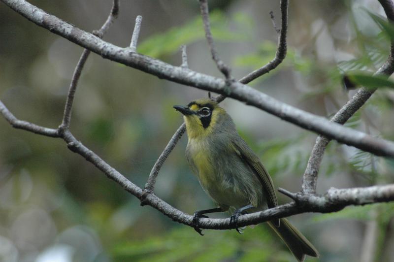 小笠原諸島の自然の画像 p1_21