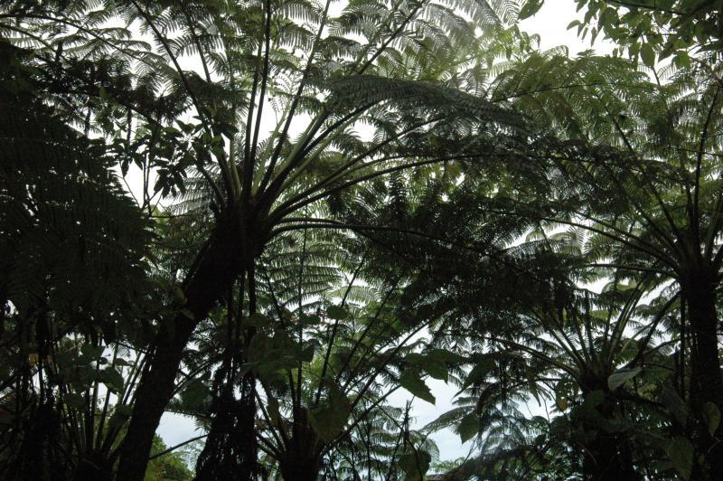 小笠原諸島の自然の画像 p1_23
