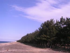 防風保安林(兵庫県南あわじ市)