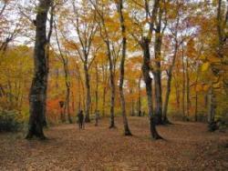 保健保安林(群馬県みなかみ町)国有林