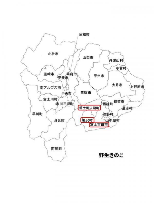 h241026yamanasi