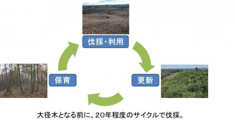 広葉樹循環利用