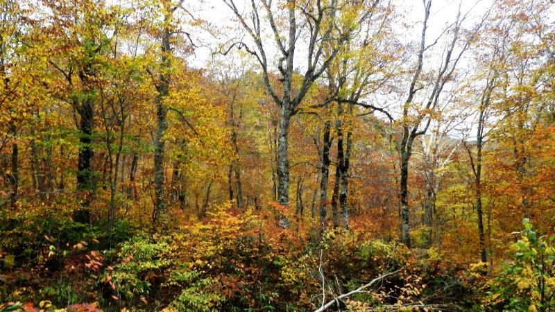 奥利根水源の森2