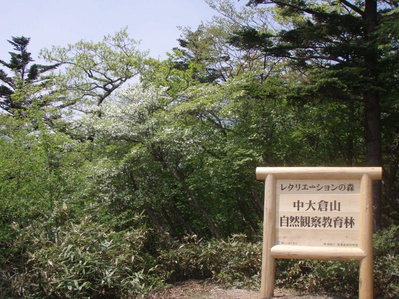中大蔵山周辺シロヤシオ