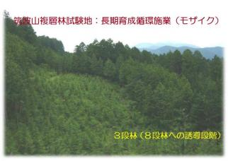 三段林(複層林)