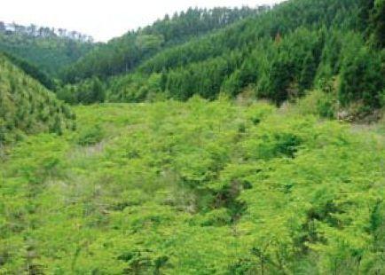 ケヤキ水辺林