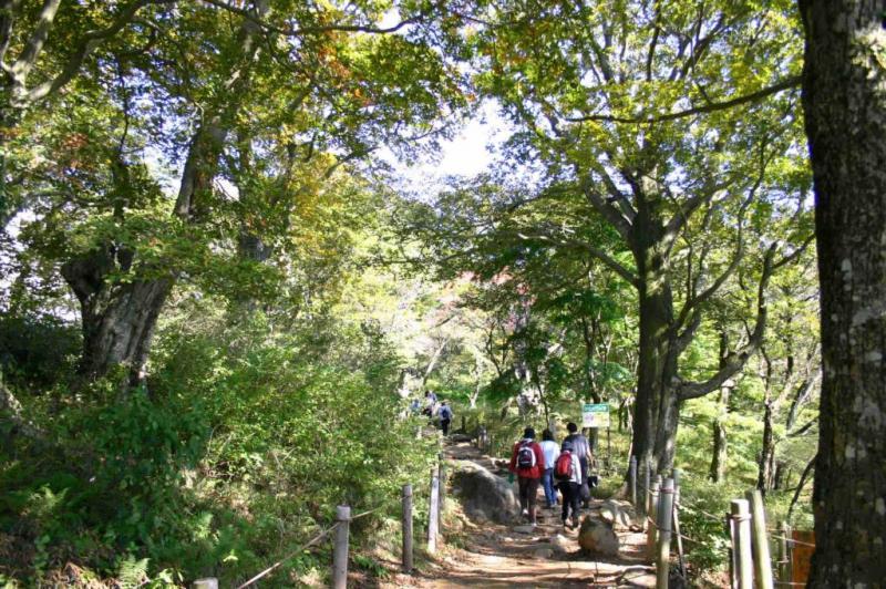 国有林内のブナ林