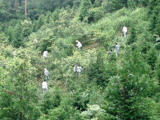 法人の森契約社員による保育活動