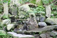 八溝山風景林(金性水)