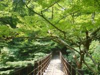 花貫渓谷自然観察教育林