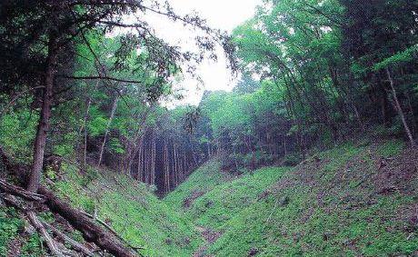 両側からアオダモやコナラなどが造林地にせり出してきている