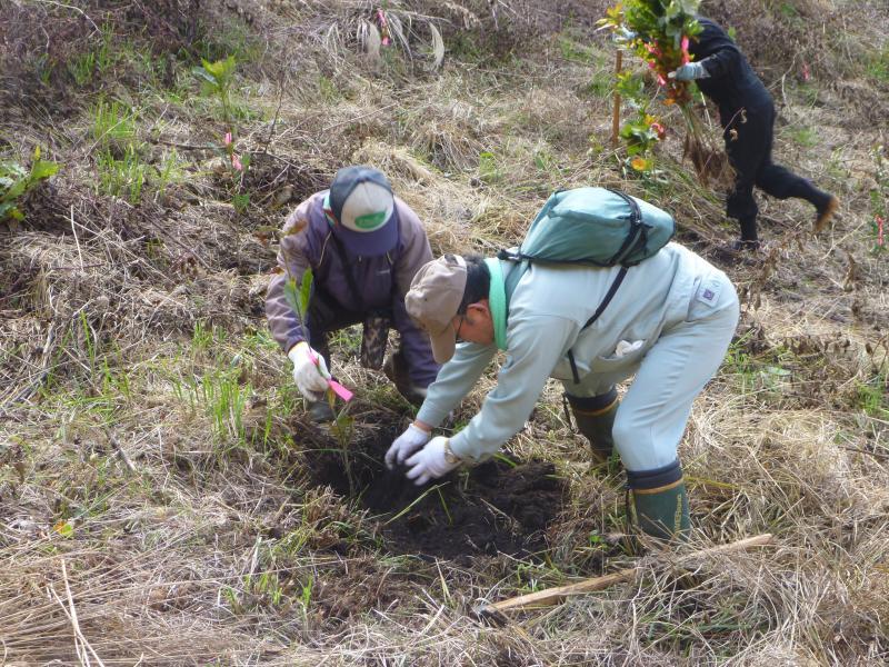 参加者による植樹風景