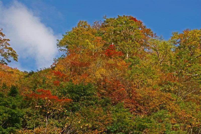 一ノ倉周辺の紅葉