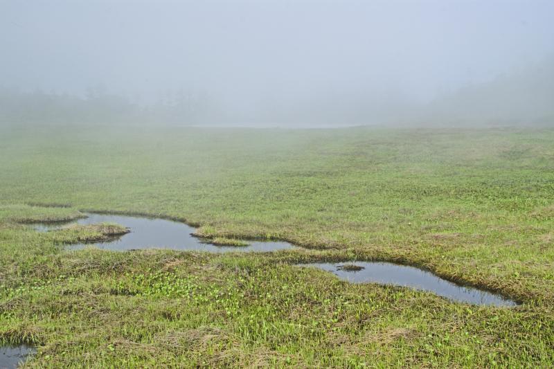 ②オヤマ沢田代の湿原